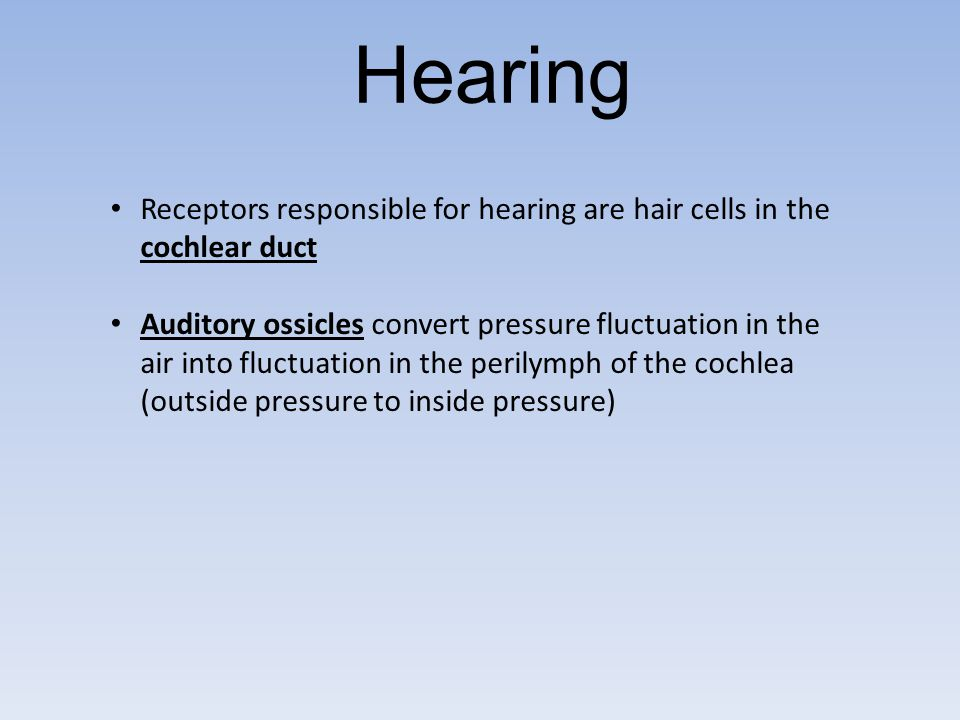 Hearing Receptors responsible for hearing are hair cells in the cochlear duct.