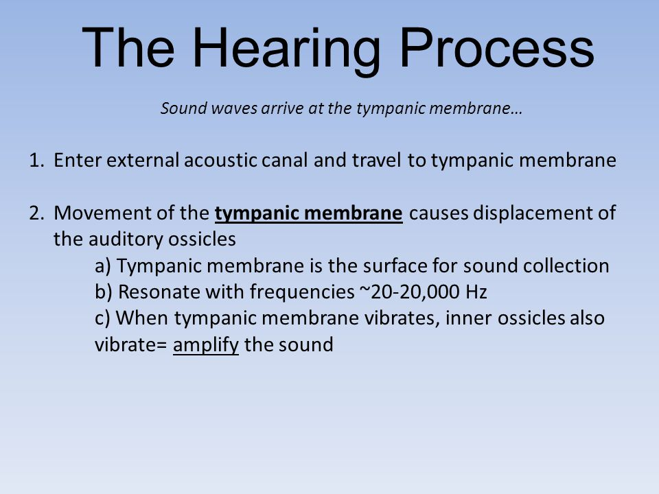 The Hearing Process Sound waves arrive at the tympanic membrane… Enter external acoustic canal and travel to tympanic membrane.