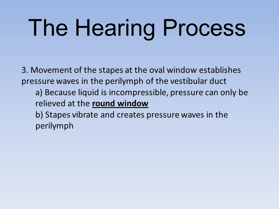The Hearing Process 3. Movement of the stapes at the oval window establishes pressure waves in the perilymph of the vestibular duct.