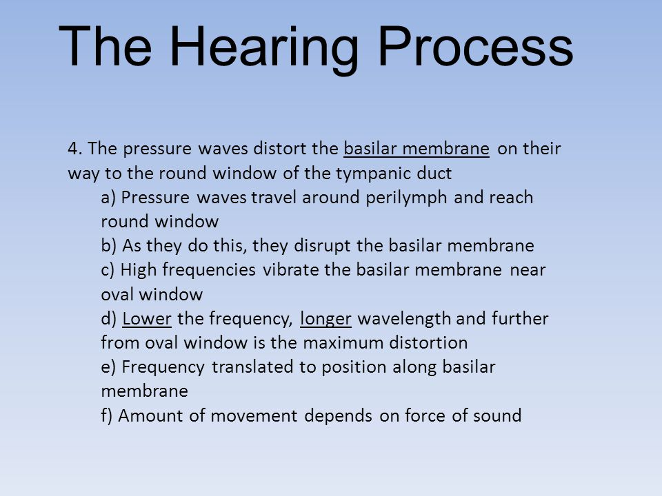The Hearing Process 4. The pressure waves distort the basilar membrane on their way to the round window of the tympanic duct.
