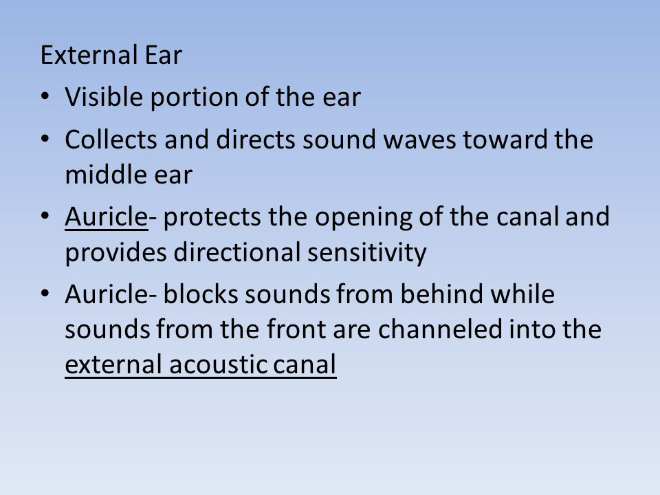 External Ear Visible portion of the ear. Collects and directs sound waves toward the middle ear.