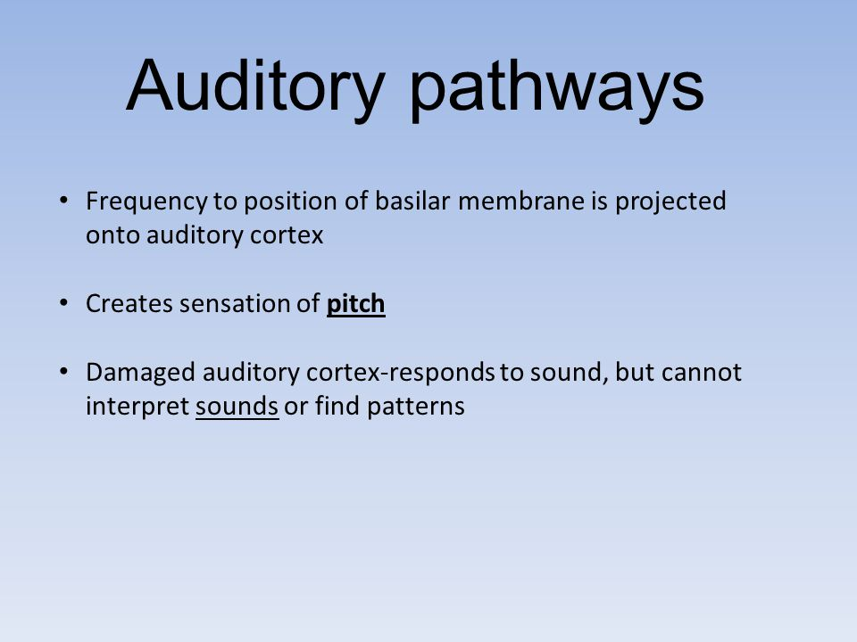 Auditory pathways Frequency to position of basilar membrane is projected onto auditory cortex. Creates sensation of pitch.