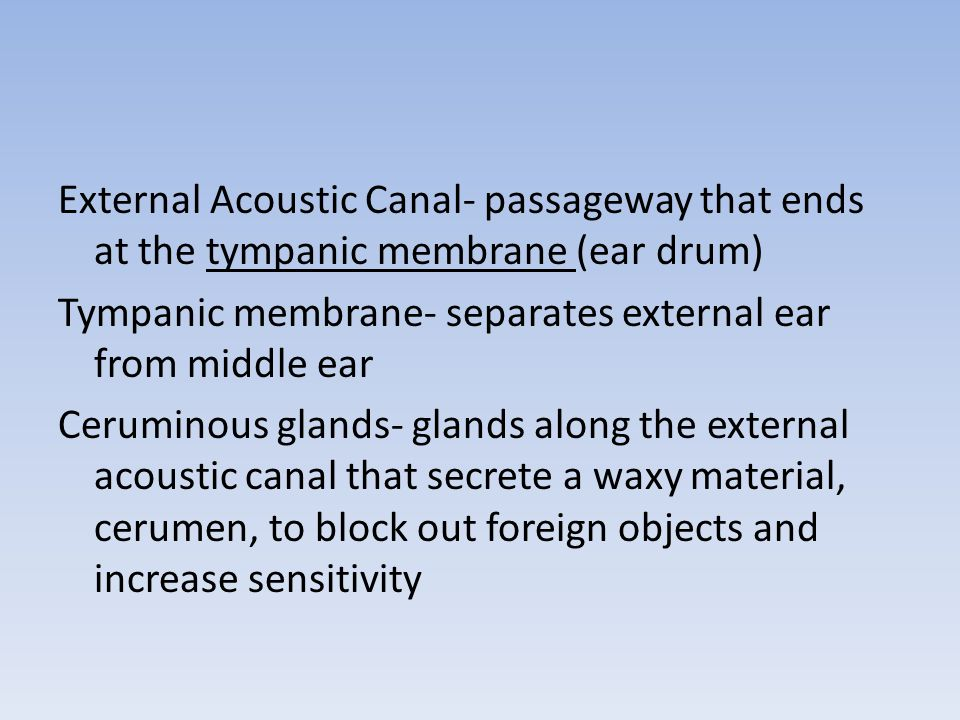 External Acoustic Canal- passageway that ends at the tympanic membrane (ear drum) Tympanic membrane- separates external ear from middle ear Ceruminous glands- glands along the external acoustic canal that secrete a waxy material, cerumen, to block out foreign objects and increase sensitivity