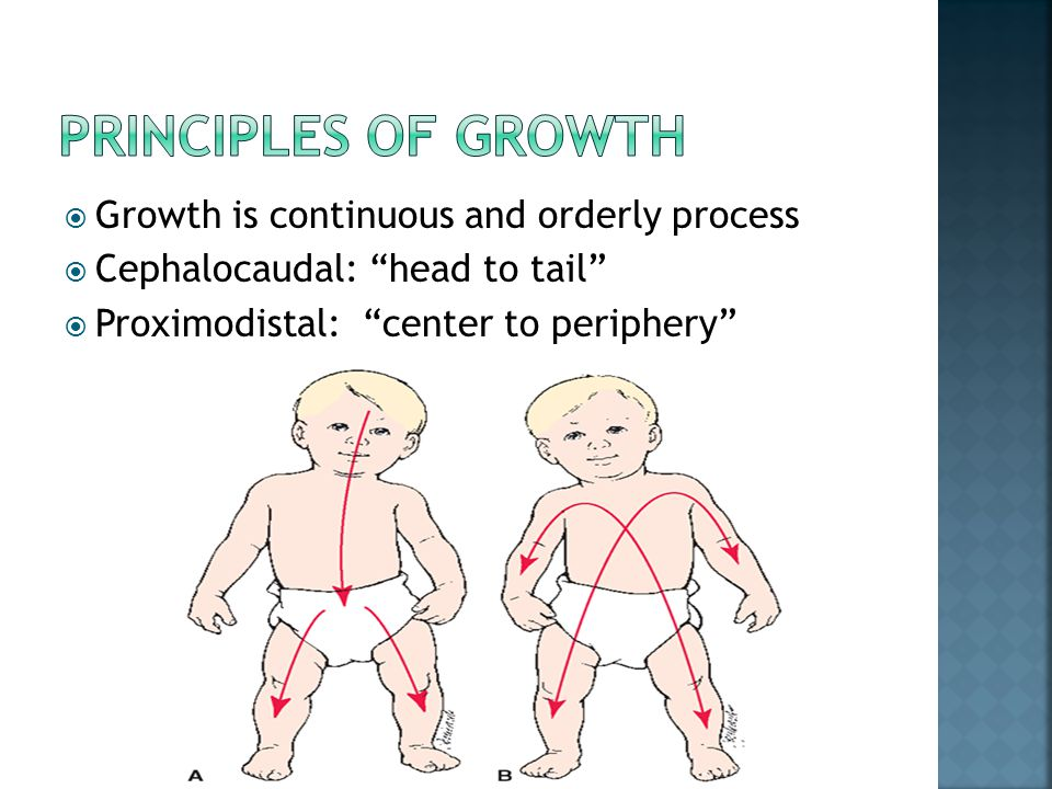 Principles of growth Growth is continuous and orderly process