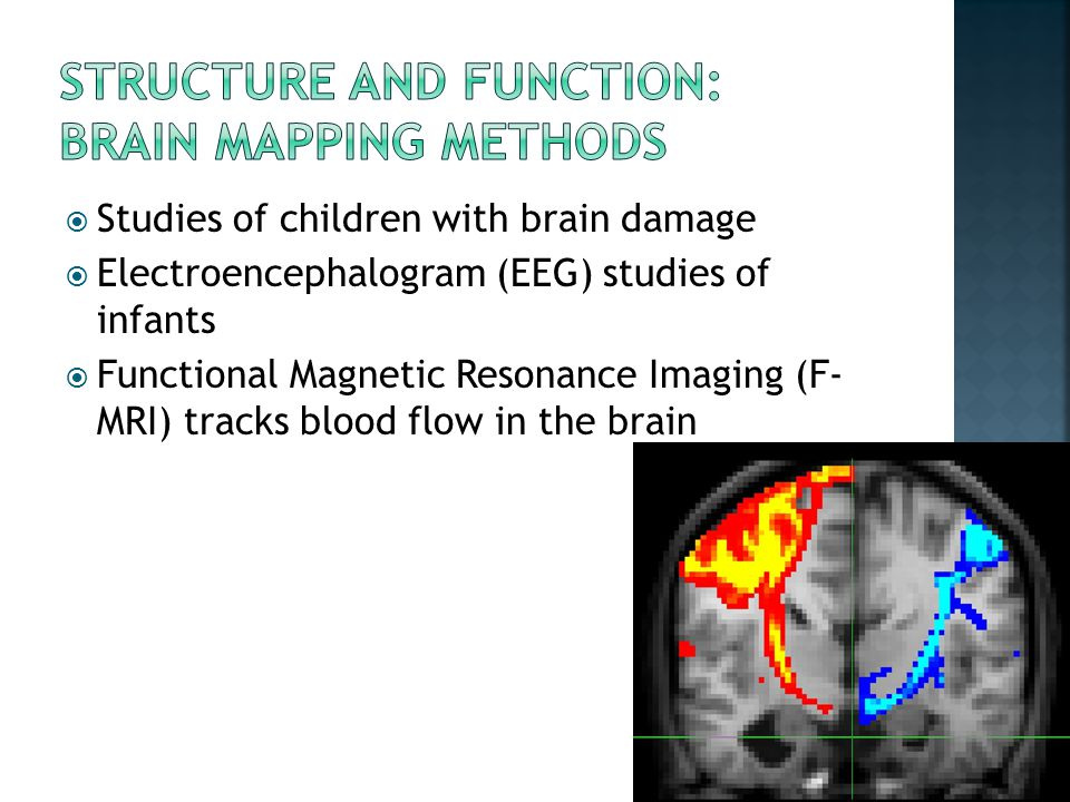 Structure and function: Brain Mapping methods