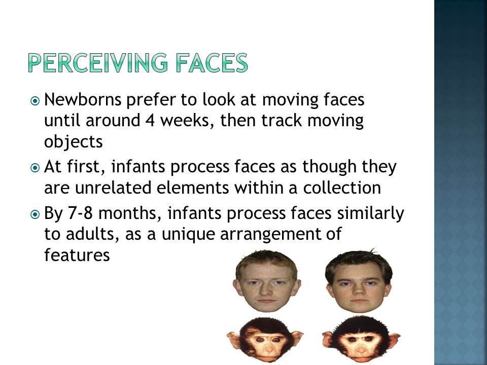 Perceiving faces Newborns prefer to look at moving faces until around 4 weeks, then track moving objects.