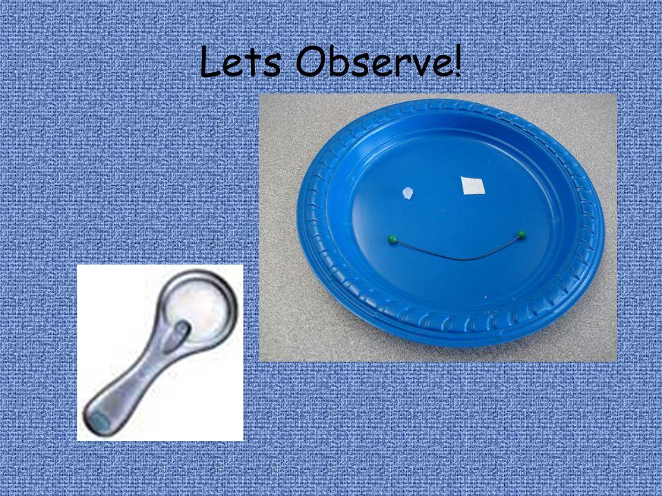 Lets Observe!