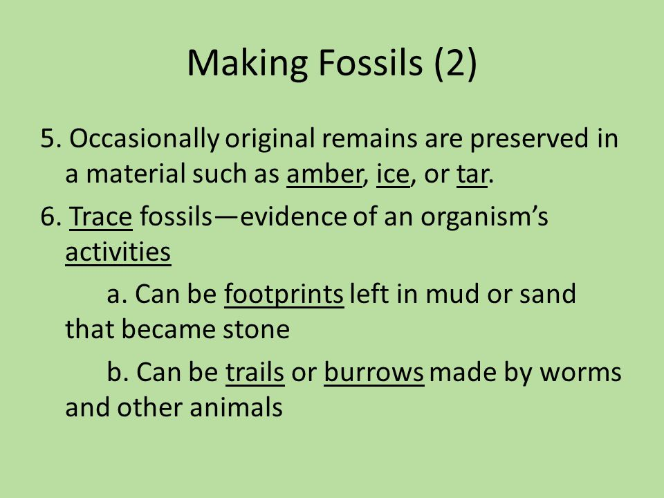 Making Fossils (2)