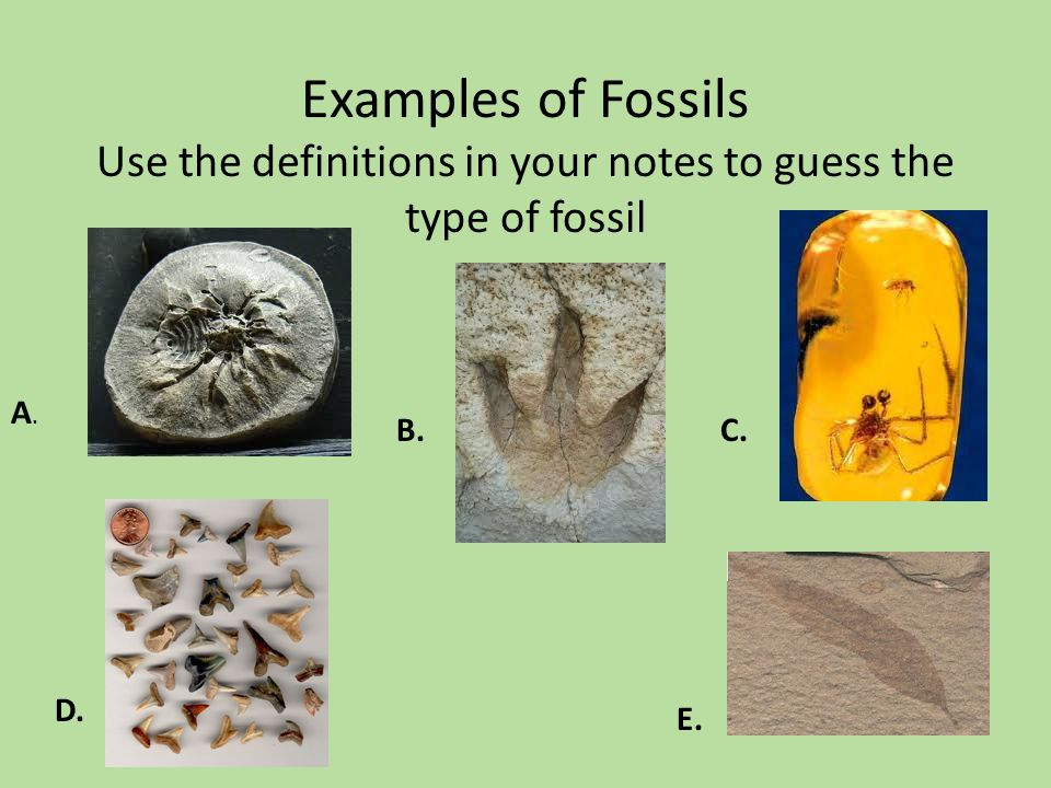 Examples of Fossils Use the definitions in your notes to guess the type of fossil