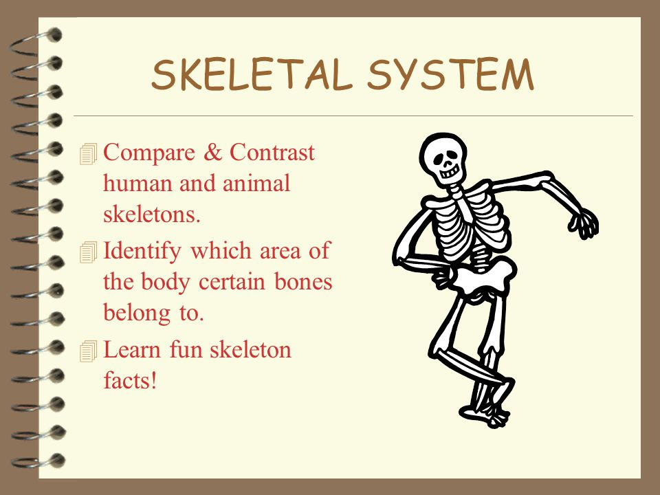 Skeletal System Compare Contrast Human And Animal Skeletons Ppt