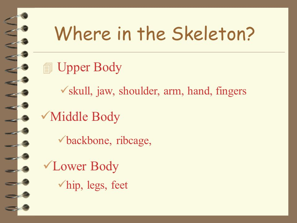 Where in the Skeleton Upper Body Middle Body Lower Body
