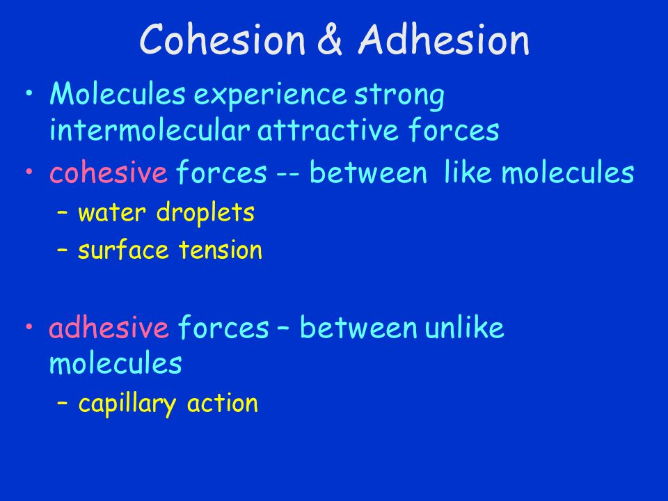 Cohesion & Adhesion Molecules experience strong intermolecular attractive forces. cohesive forces -- between like molecules.