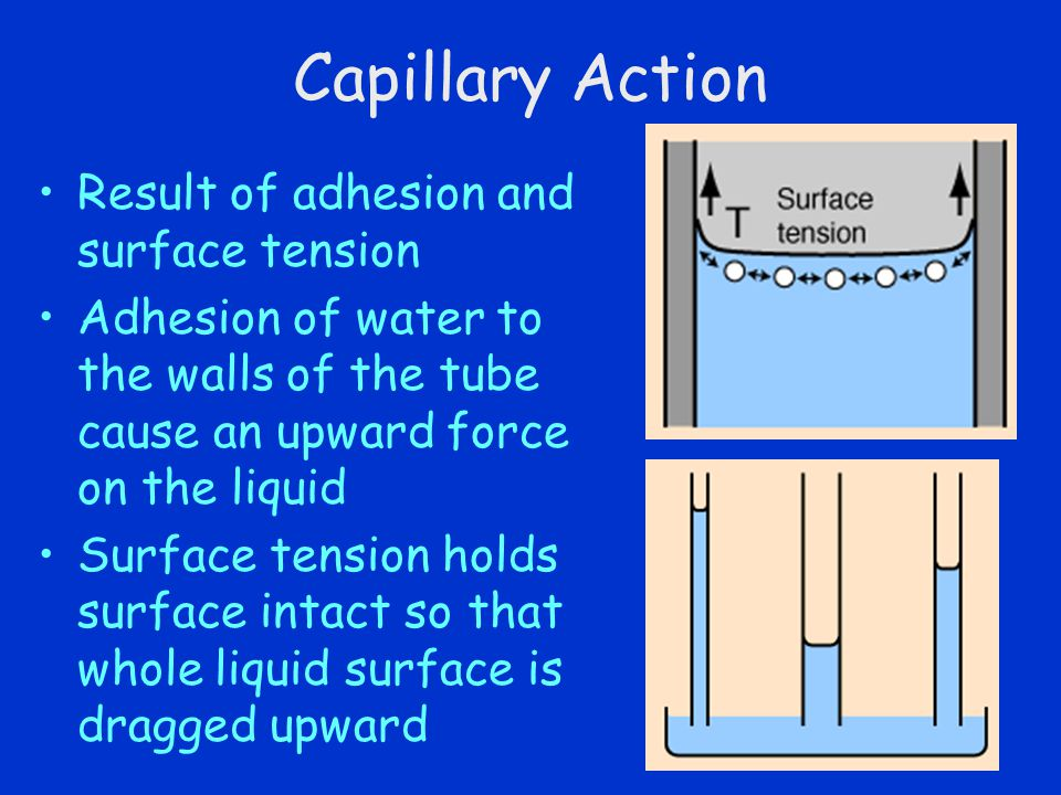 Capillary Action Result of adhesion and surface tension