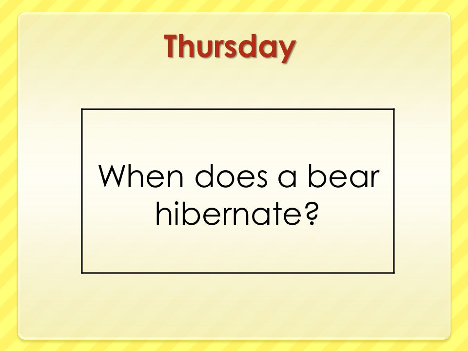 When does a bear hibernate
