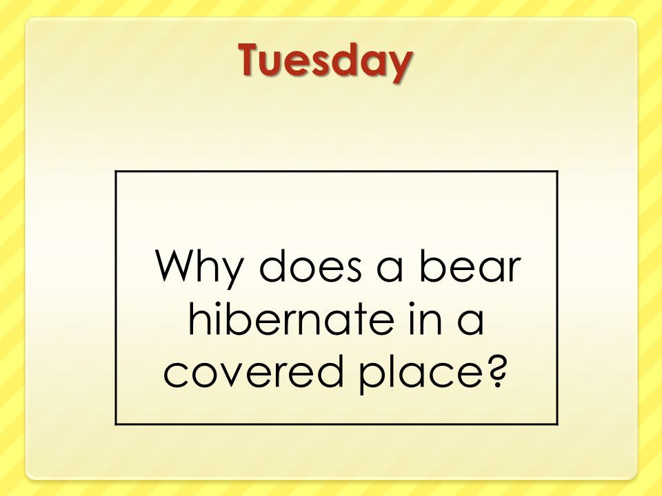 Why does a bear hibernate in a covered place