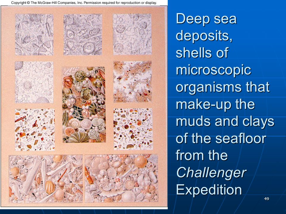 Deep sea deposits, shells of microscopic organisms that make-up the muds and clays of the seafloor from the Challenger Expedition