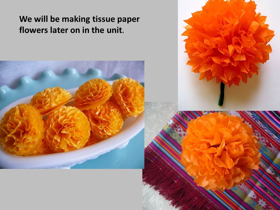 We will be making tissue paper flowers later on in the unit.