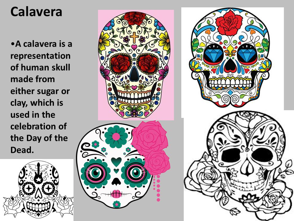 Calavera A calavera is a representation of human skull made from either sugar or clay, which is used in the celebration of the Day of the Dead.