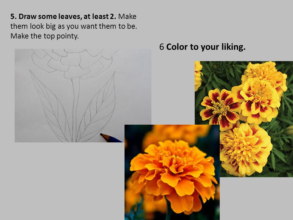 5. Draw some leaves, at least 2