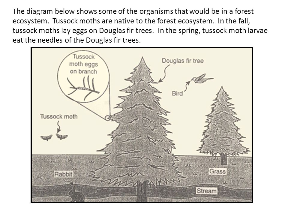 The diagram below shows some of the organisms that would be in a forest ecosystem.