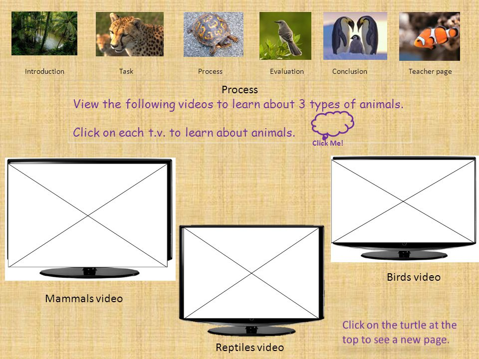 View the following videos to learn about 3 types of animals.