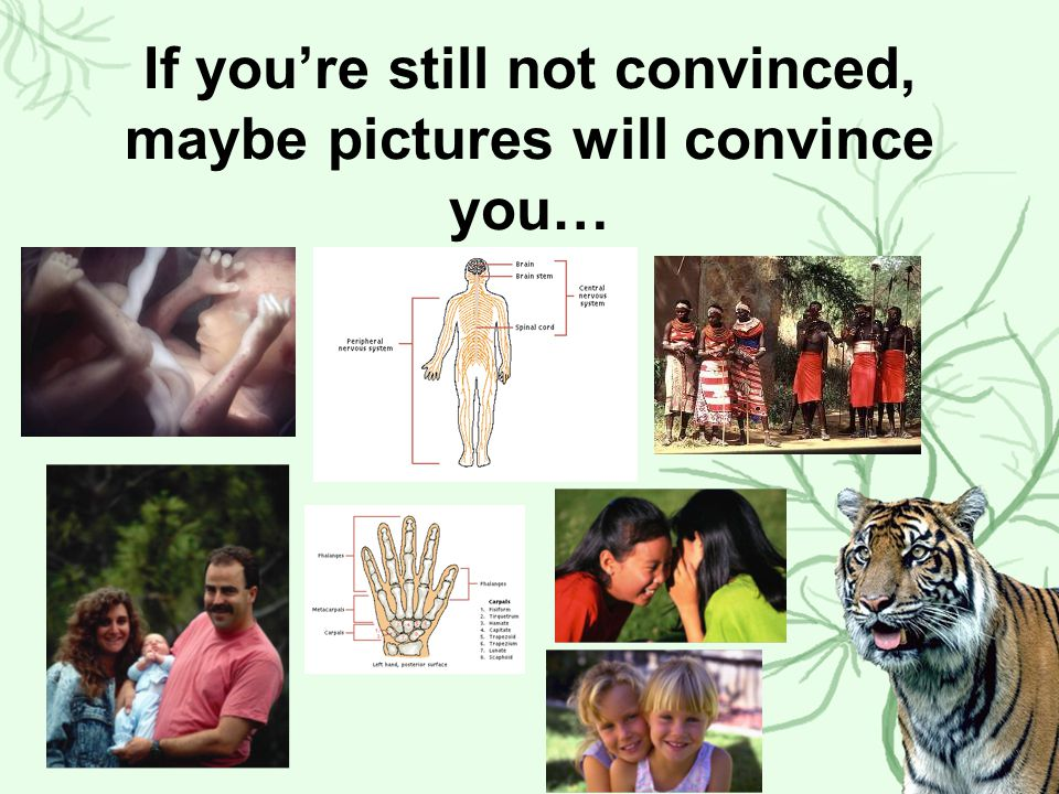 If you're still not convinced, maybe pictures will convince you…