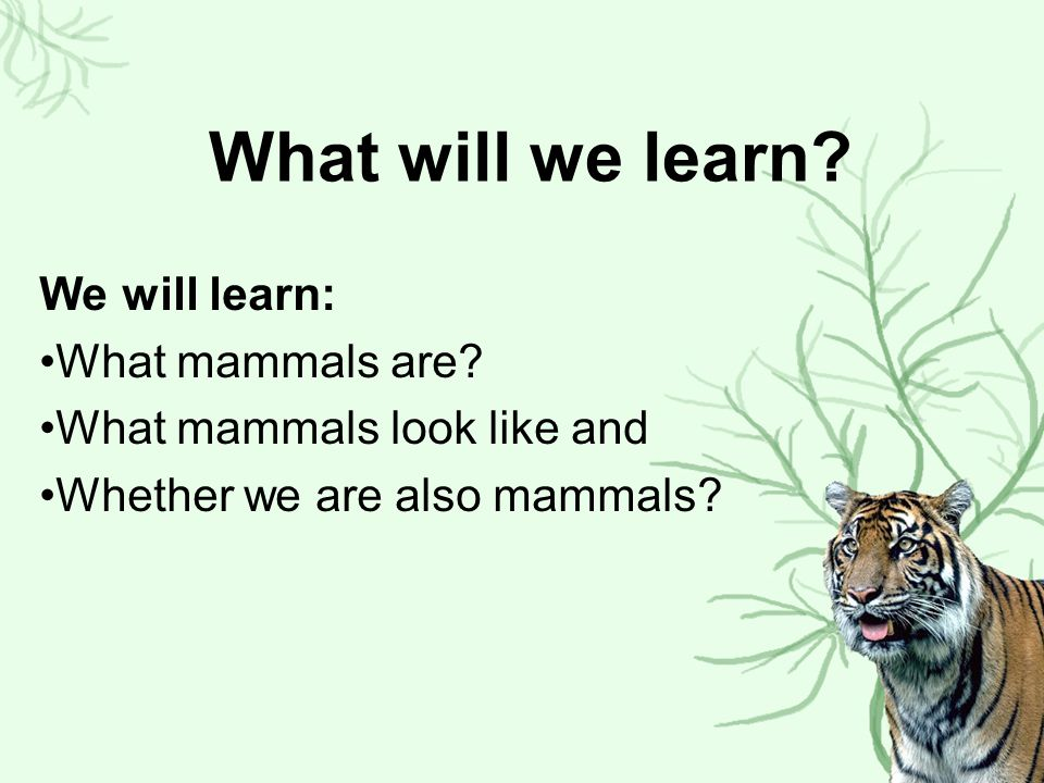 What will we learn We will learn: What mammals are