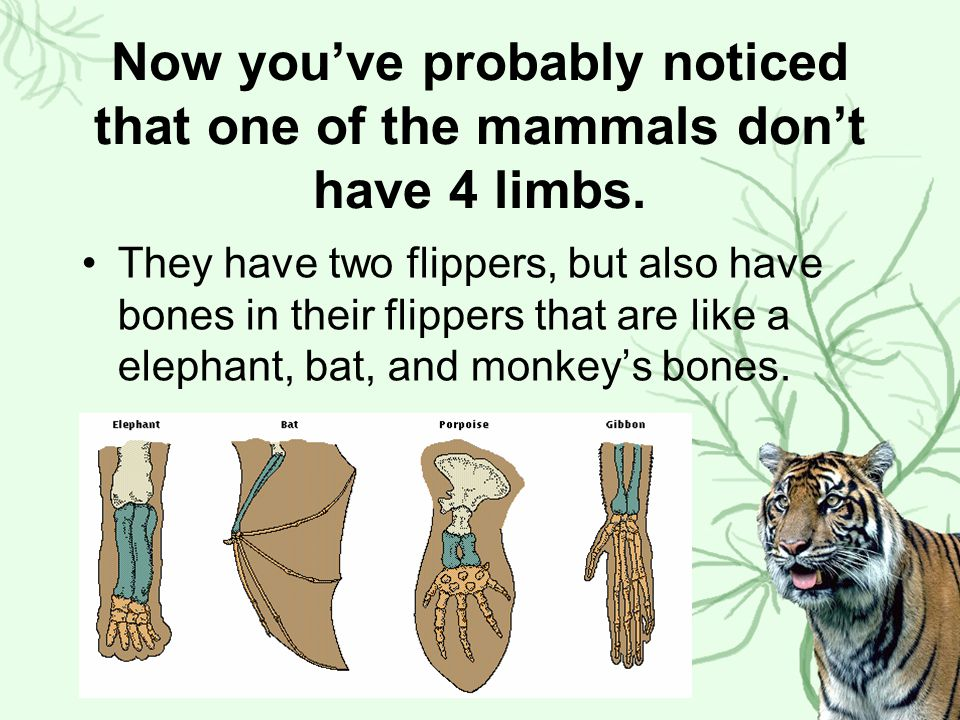 Now you've probably noticed that one of the mammals don't have 4 limbs.