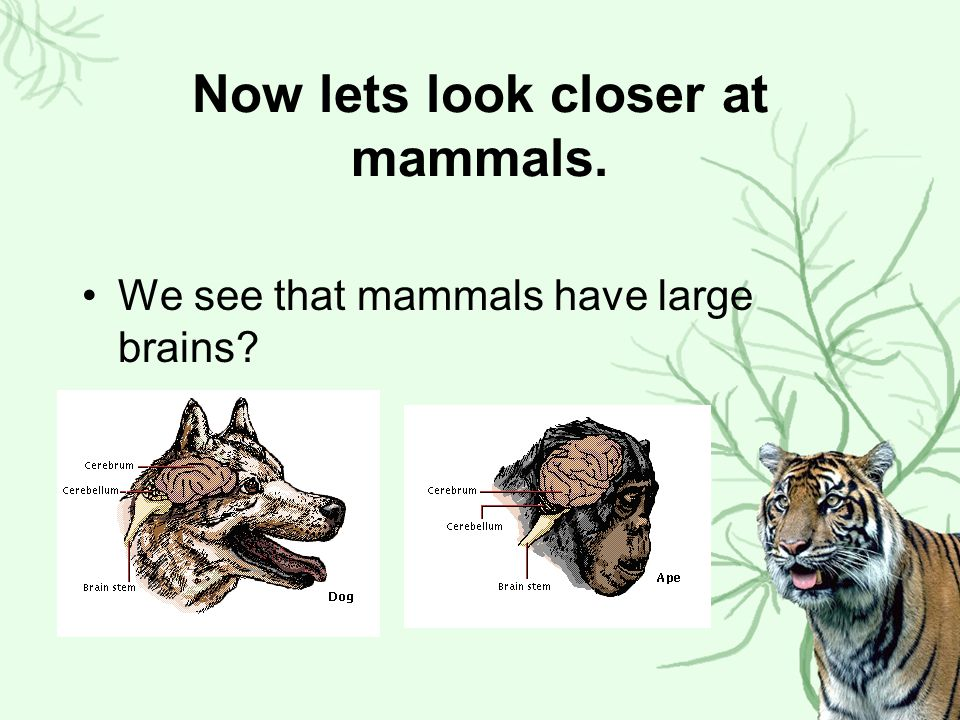 Now lets look closer at mammals.