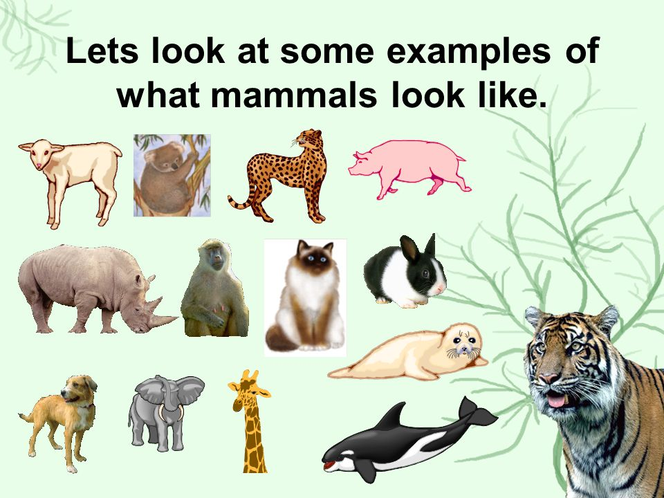 Lets look at some examples of what mammals look like.