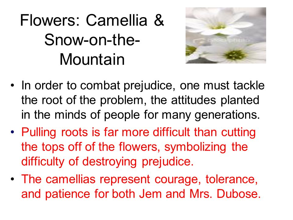 Flowers: Camellia & Snow-on-the-Mountain