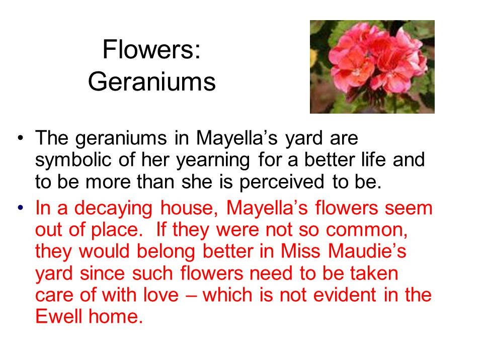Flowers: Geraniums The geraniums in Mayella's yard are symbolic of her yearning for a better life and to be more than she is perceived to be.