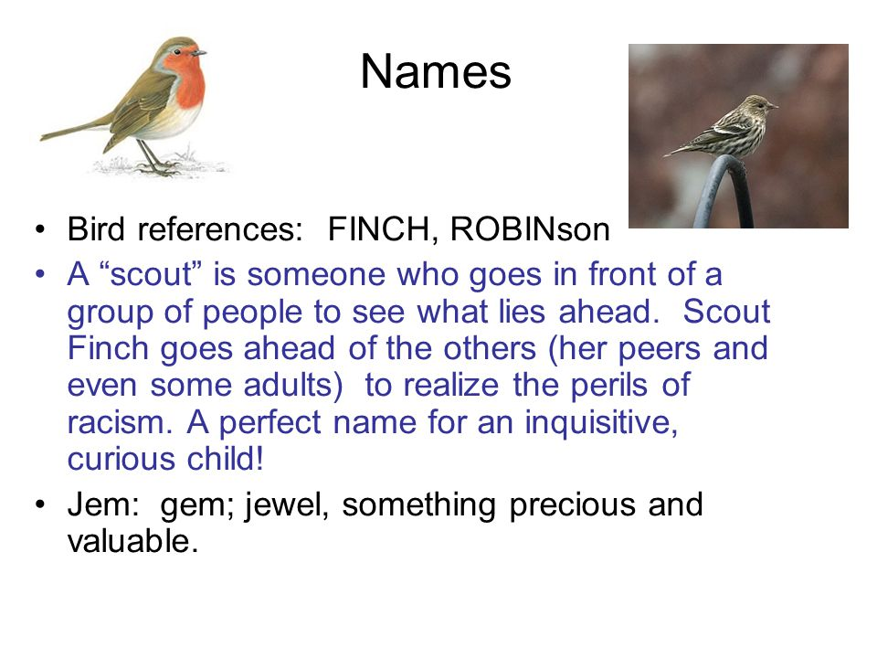 Names Bird references: FINCH, ROBINson