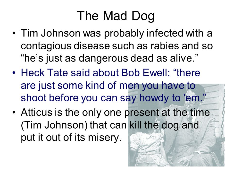 The Mad Dog Tim Johnson was probably infected with a contagious disease such as rabies and so he's just as dangerous dead as alive.