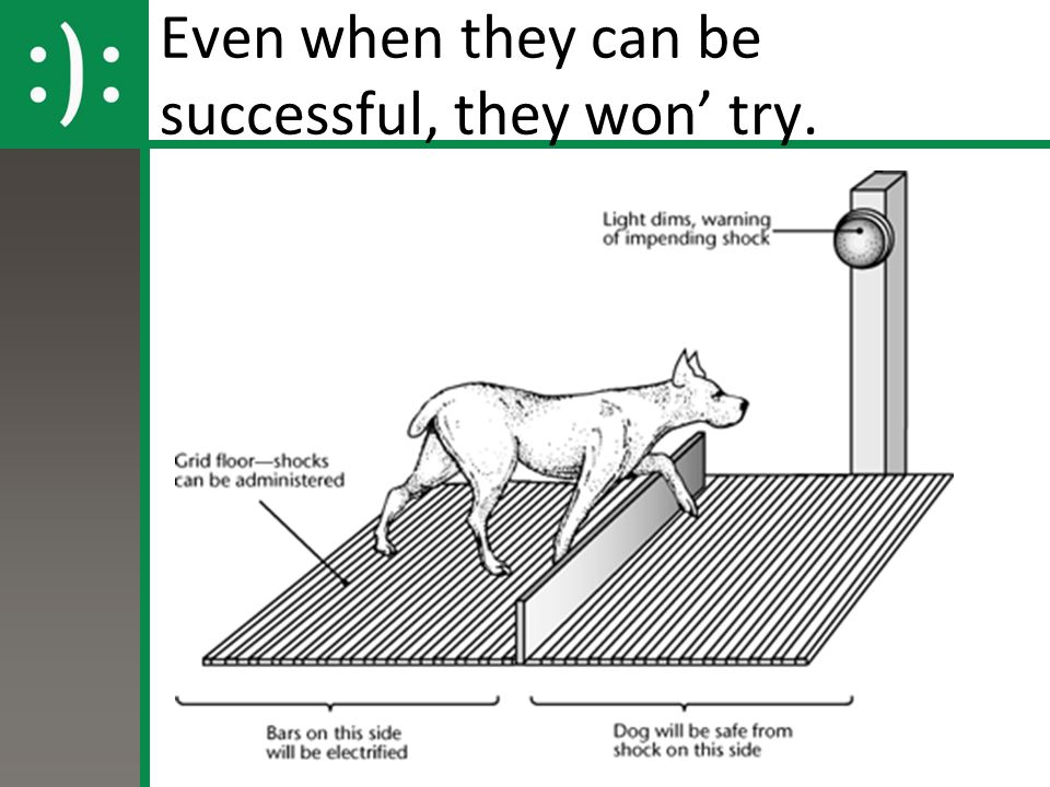 Even when they can be successful, they won' try.
