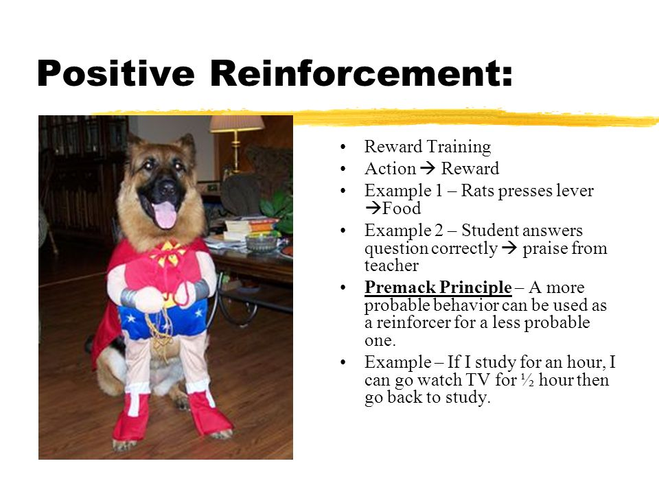 Positive Reinforcement: