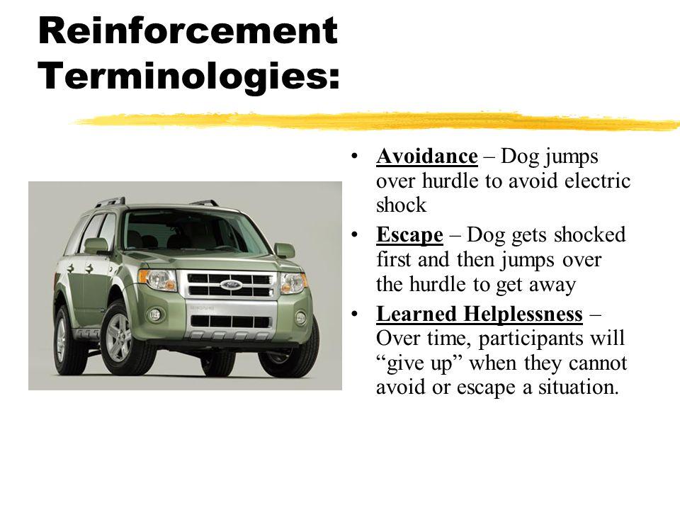 Reinforcement Terminologies: