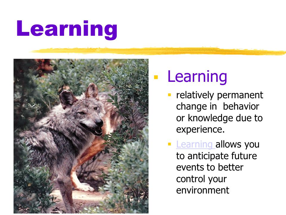 Learning Learning. relatively permanent change in behavior or knowledge due to experience.