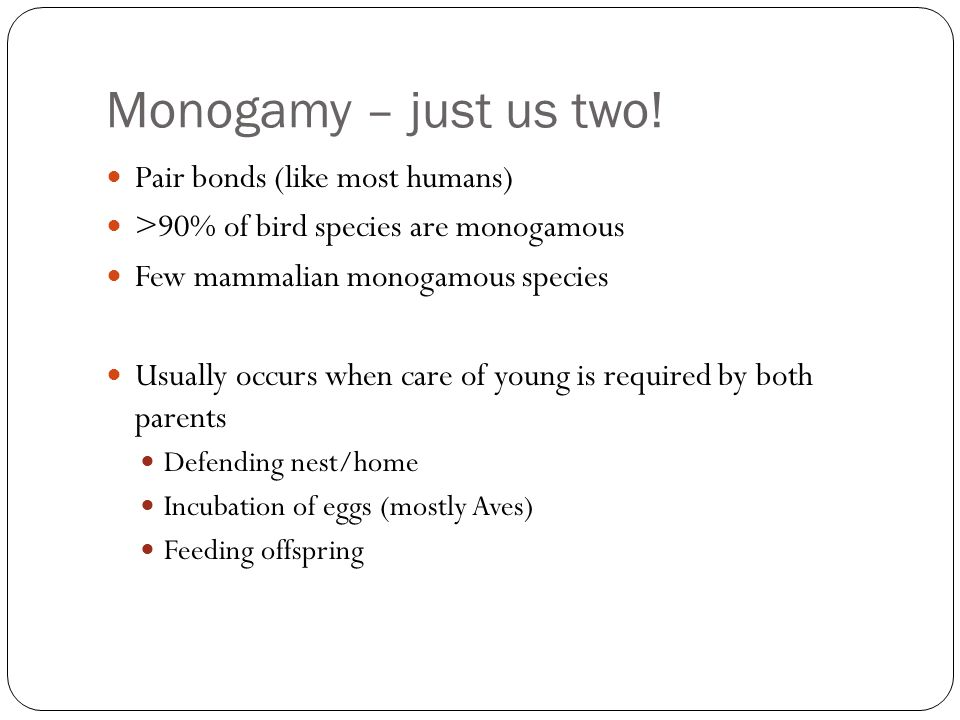 Monogamy – just us two! Pair bonds (like most humans)