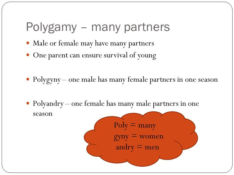 Polygamy – many partners