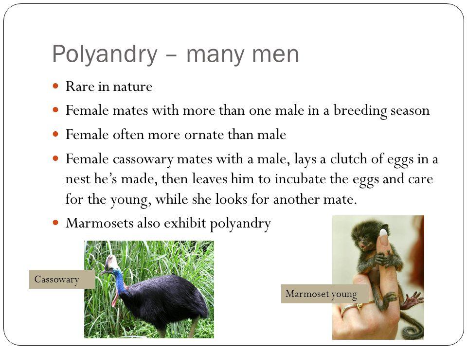 Polyandry – many men Rare in nature
