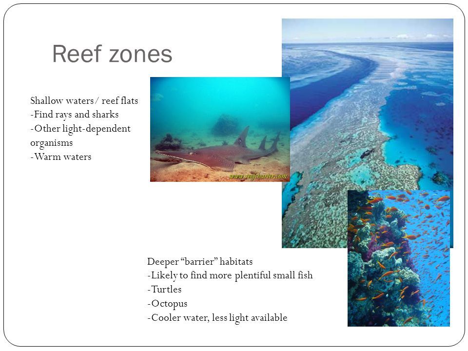 Reef zones Shallow waters/ reef flats Find rays and sharks