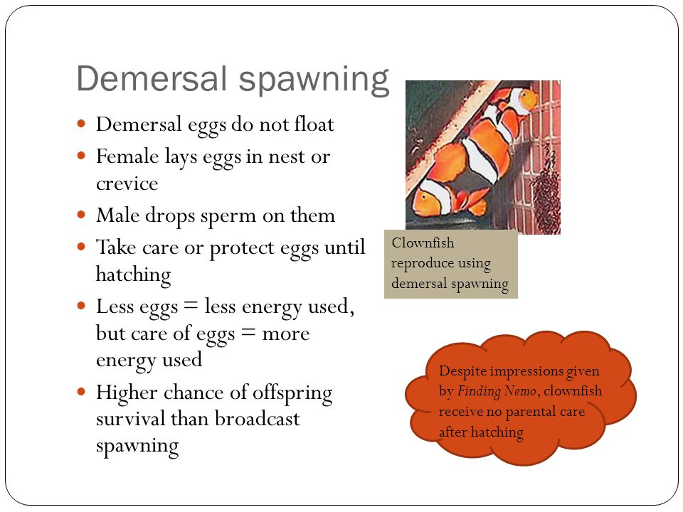 Demersal spawning Demersal eggs do not float