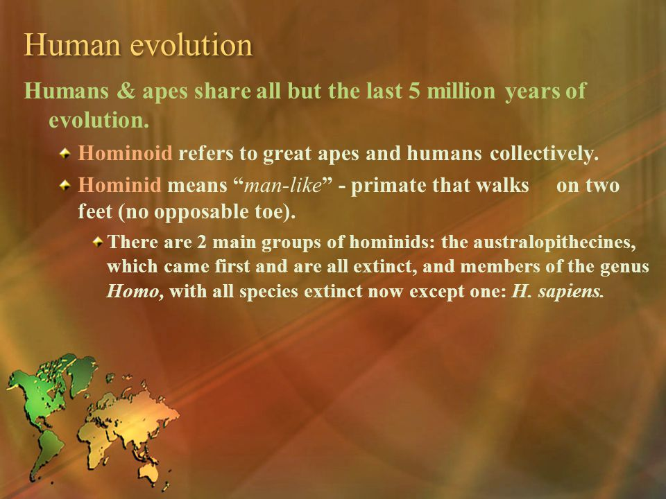 Human evolution Humans & apes share all but the last 5 million years of evolution. Hominoid refers to great apes and humans collectively.