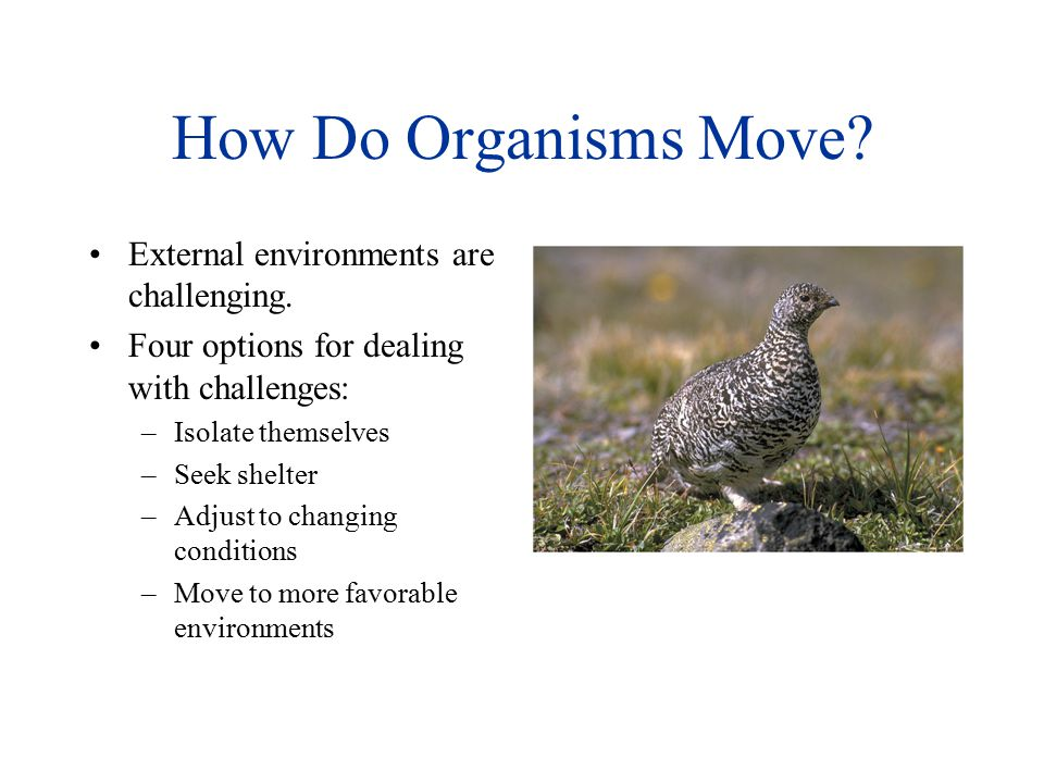 How Do Organisms Move External environments are challenging.