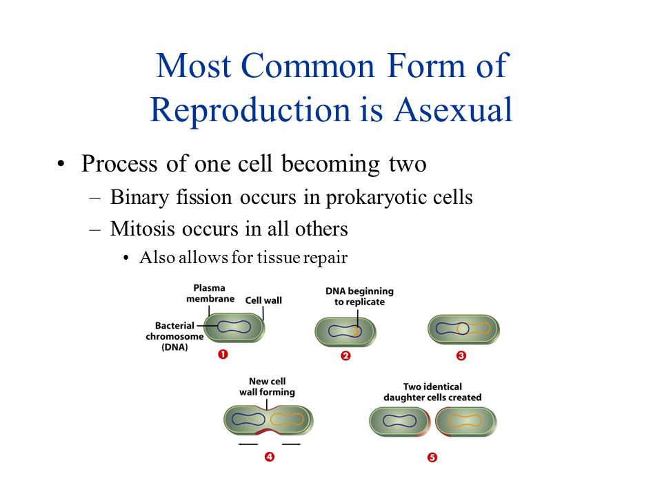 Most Common Form of Reproduction is Asexual