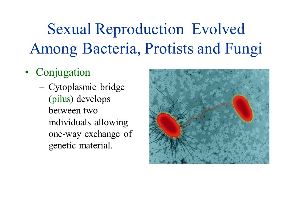 Sexual Reproduction Evolved Among Bacteria, Protists and Fungi