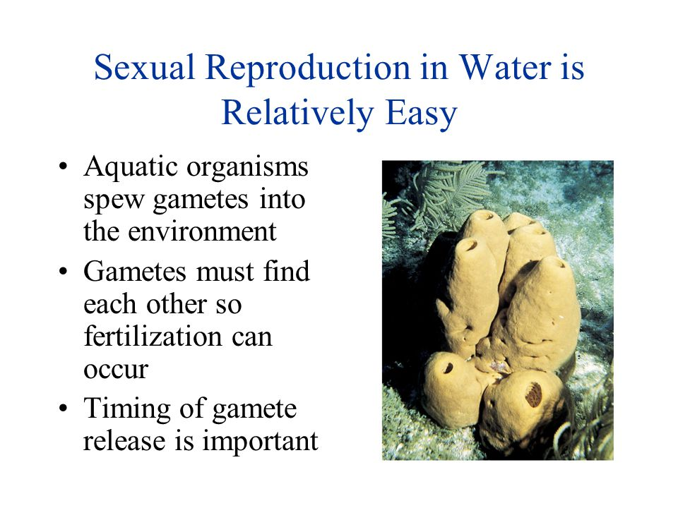 Sexual Reproduction in Water is Relatively Easy
