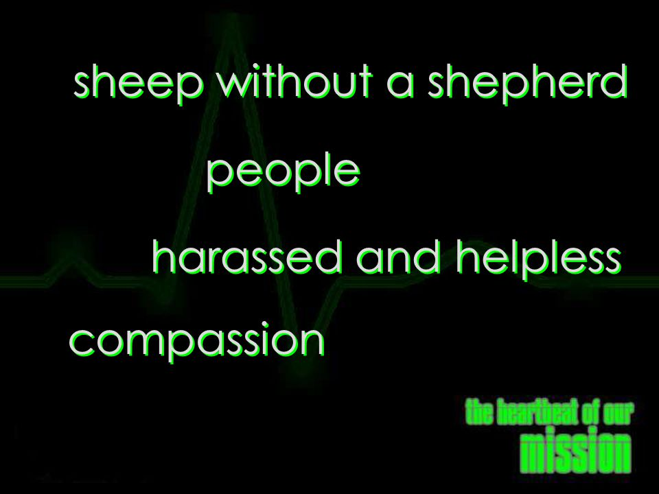 sheep without a shepherd