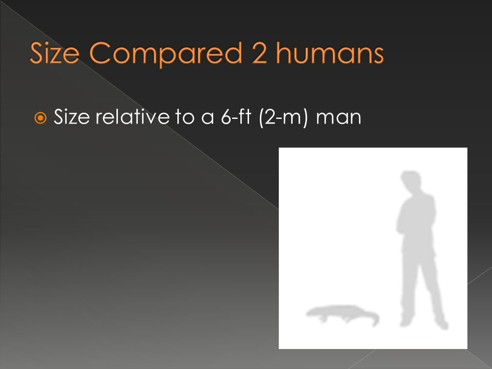 Size Compared 2 humans Size relative to a 6-ft (2-m) man